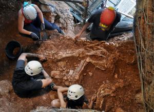 malla de cable en cova del rinoceront